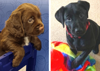 Prince William School Welcomes Therapy Dogs Murphy and Mia